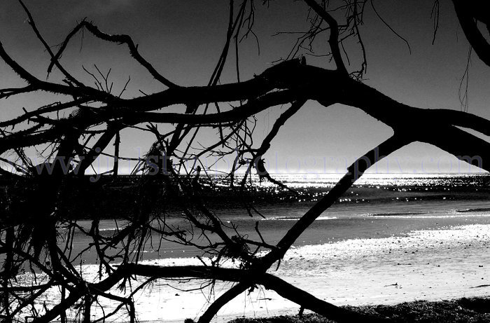 Black And White Photography Beach Black And White Beach